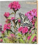 Swallow Tail Wood Print by Dave Woodbridge