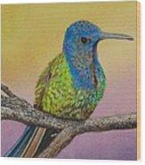 Swallow-tailed Hummingbird Wood Print