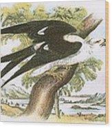 Swallow-tailed Kite Wood Print