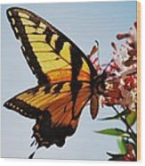 Swallowback Butterfly # 2 Wood Print