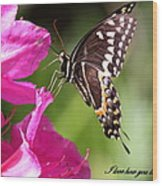 Swallowtail And Azalea - Love Wood Print