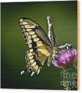 Swallowtail And Friends Wood Print