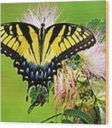Swallowtail And Mimosa Wood Print