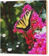 Swallowtail Beauty  Wood Print