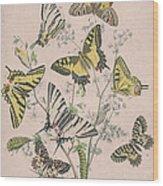 Swallowtail Butterflies - Papilionidae Wood Print