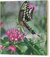 Swallowtail Butterfly 01 Wood Print