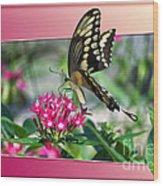 Swallowtail Butterfly 02 Wood Print