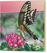 Swallowtail Butterfly 04 Wood Print