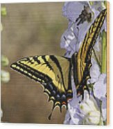 Swallowtail Butterfly 1 Wood Print