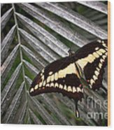 Swallowtail Butterfly Wood Print by Olivier Le Queinec
