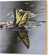 Swallowtail - Butterfly - Reflections Wood Print