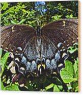 Swallowtail Butterfly Wood Print by Susan Leggett