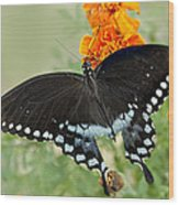 Swallowtail Butterfly With Marigolds Wood Print