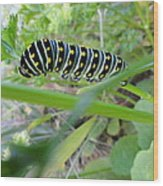 Swallowtail Caterpillar Wood Print