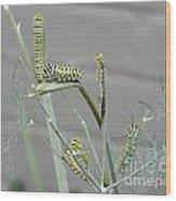 Swallowtail Feast Wood Print