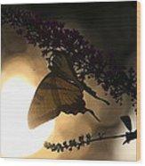 Swallowtail Light Wood Print