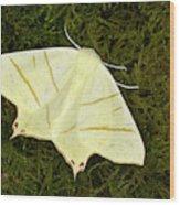 Swallowtail Moth Wood Print