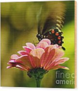 Swallowtail Motion Wood Print