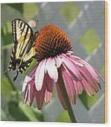 Looking Up At Swallowtail On Coneflower Wood Print