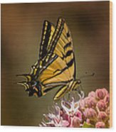 Swallowtail On Milkweed Wood Print