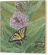 Swallowtail On Milkweed Wood Print