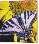 Swallowtail Sunflower Wood Print