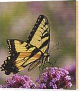Swallowtail Sweetness Wood Print