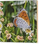 Swallowtail Wood Print