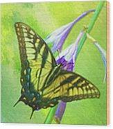 Swallowtail Visits Hosta Flowers Wood Print