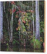 Swamp Beauty Wood Print