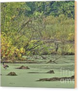 Swamp Birds Wood Print by Deborah Smolinske