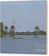 Swamp Cypress Trees Wood Print