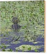 Swamp Gator Wood Print