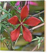 Swamp Hibiscus Wood Print
