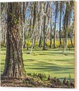 Swamp In Magnolia Plantation And Gardens Charleston Sc Wood Print