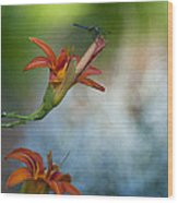 The Wood Lily And Dragon Fly Wood Print