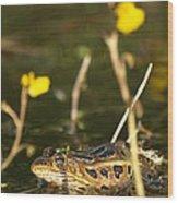 Swamp Muscian Wood Print