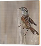 Swamp Sparrow Pictures 17 Wood Print