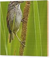 Swamp Sparrow Pictures Wood Print
