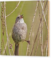 Swamp Sparrow Split Decision Wood Print