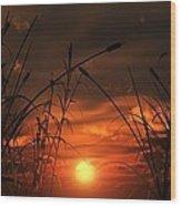 Swamp Sunset  Wood Print