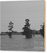 Swamp Tall Cypress Trees Black And White Wood Print