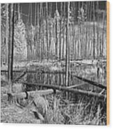 Swamp Trees Wood Print