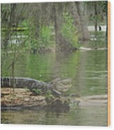 Swampland Wood Print
