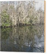 Bold Cypress Reflection Wood Print