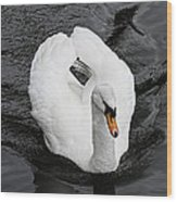 Swan 2 Wood Print