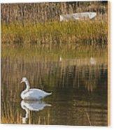 Swan And Boat 2 Wood Print