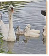 Swan And Chicks Wood Print