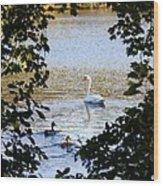 Swan And Ducks Through Trees Wood Print