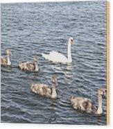 Swan And His Ducklings Wood Print